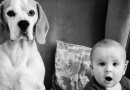 Friends For Life: The Beagle and the Baby