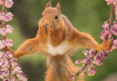 "20+ Funniest Wildlife ""Kodak"" Moments"